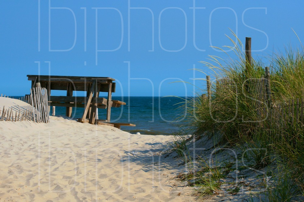 Brant Beach Dunes (Color)