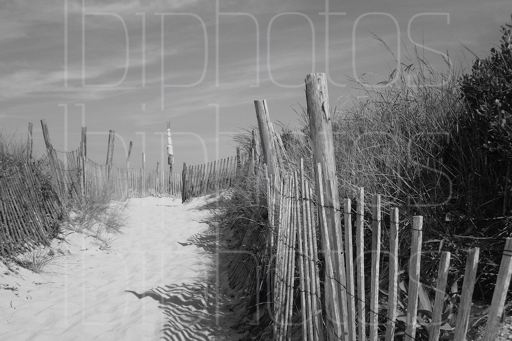 Dunes 76th Street, Harvey Cedars (BW)