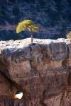 Grand Canyon 1 (Color)