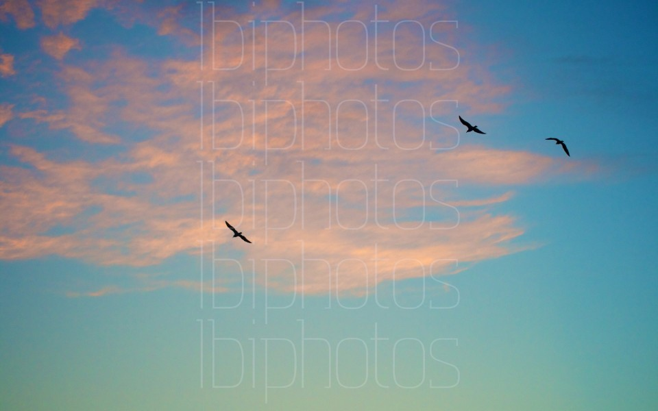 Three Bird Flight