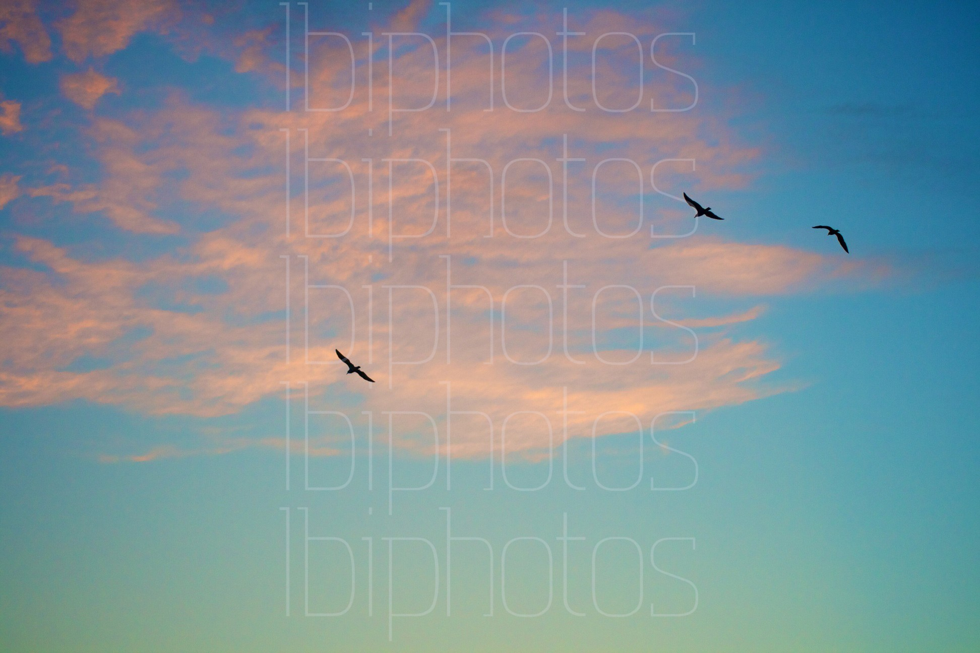 Three Bird Flight (Color)