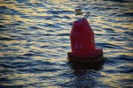 Bob A Buoy 02 (Color)