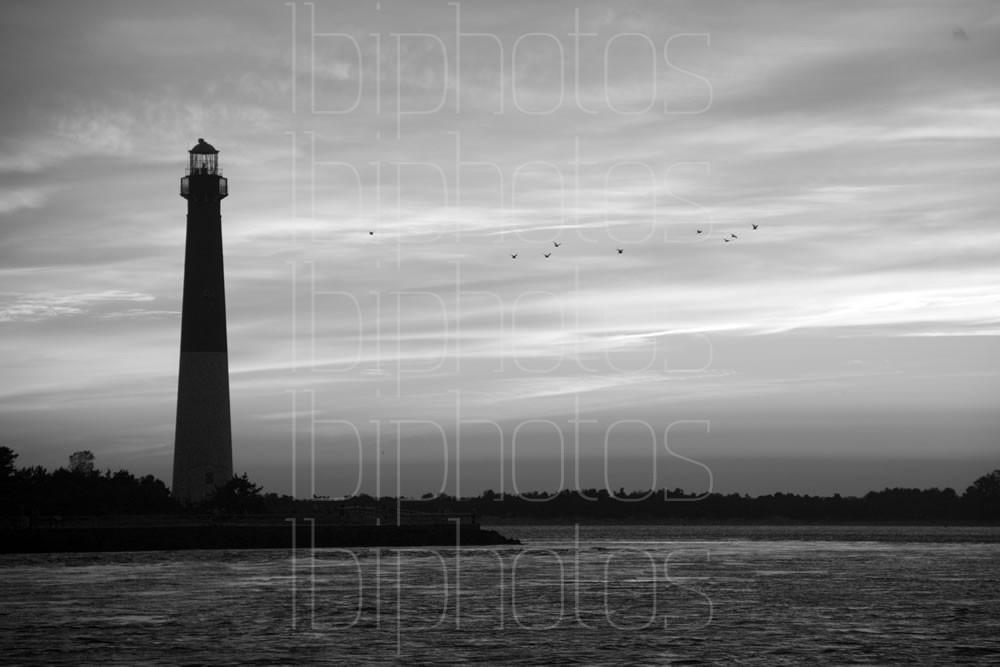 Lighthouse Gulls (BW)