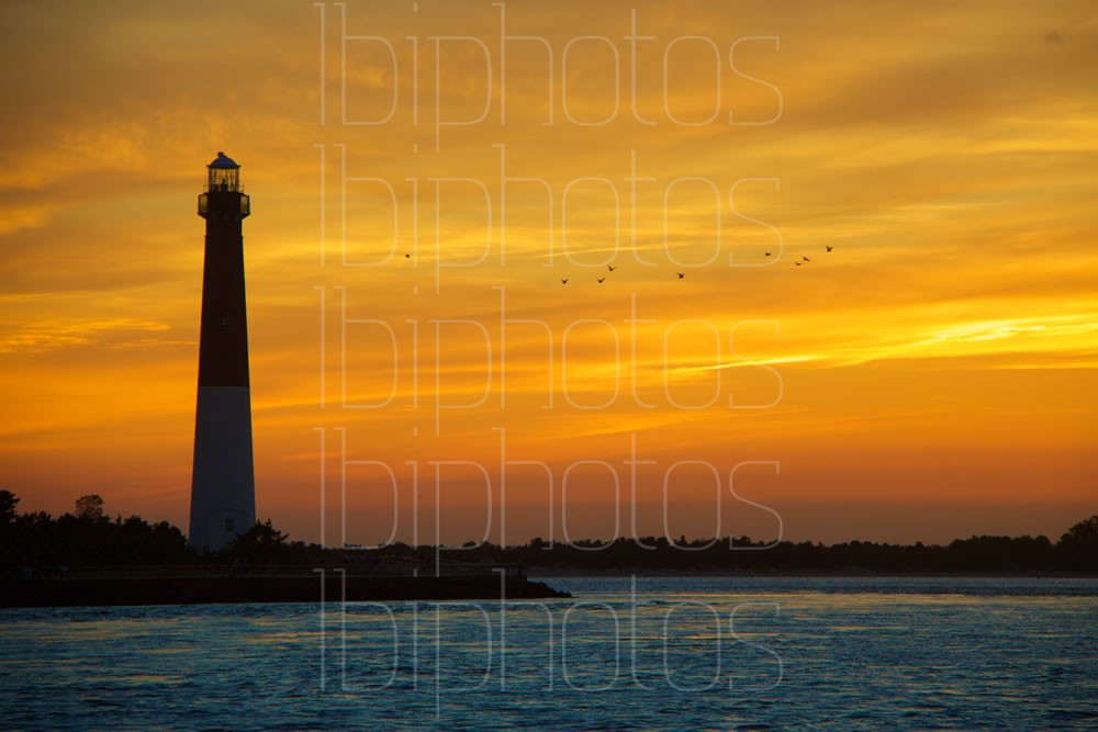 Lighthouse Gulls (Color)
